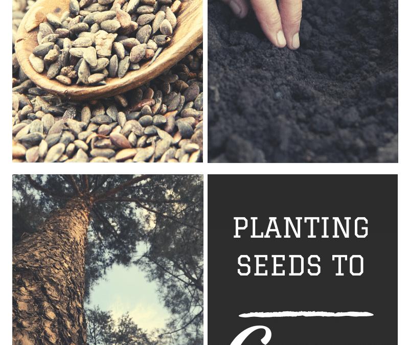 Planting Seeds to Grow!